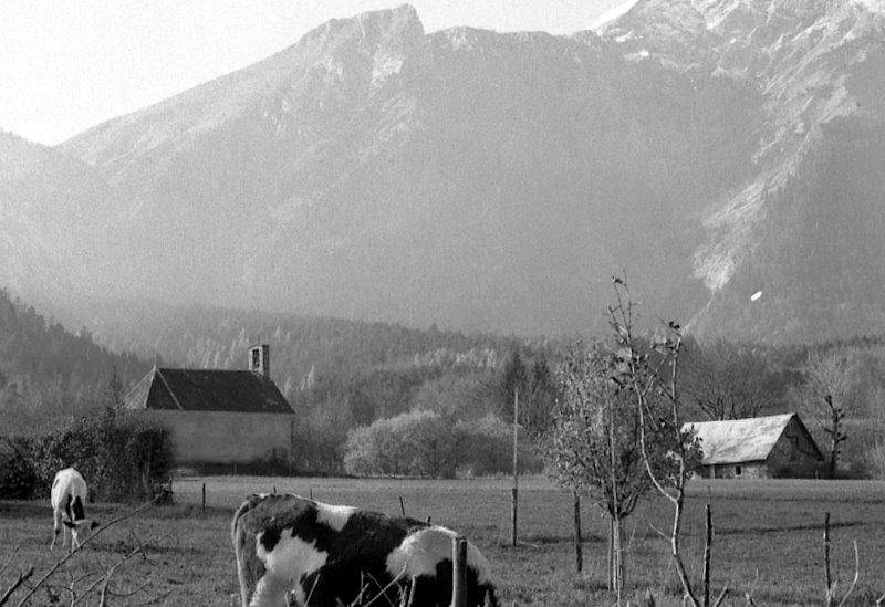 st +®tiene vache